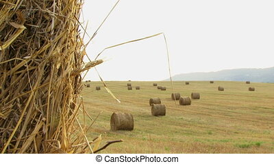 Hay in the field