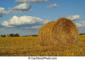 Hay landscape