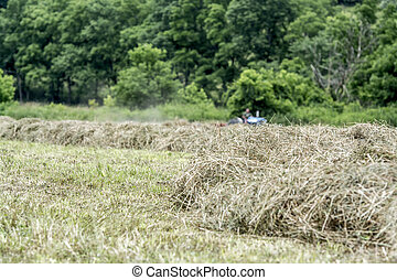 Hay Making with tractor - Close up of hay windrows with ...