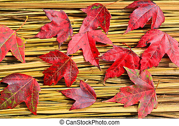 Hay Maple Leaf
