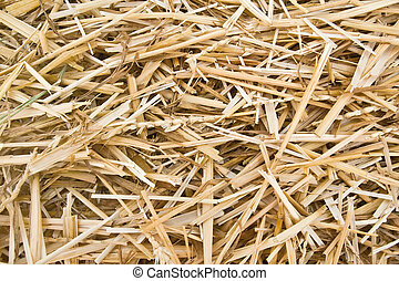straw - hay n straw