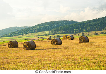 Hay on the meadow