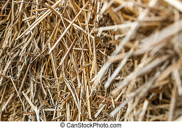 Hay photographed in close-up with blurred, soft focus. The rural background of dry yellow straw