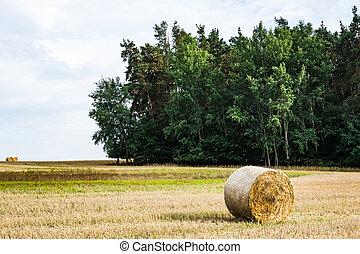 Hay roll in a field