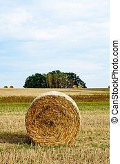 Hay roll in a field II