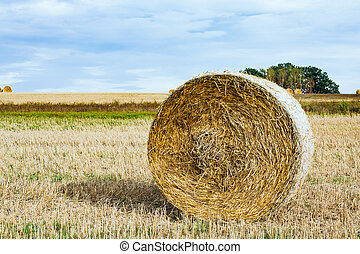 Hay roll in a field III