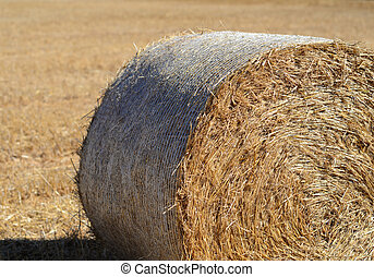 Hay roll on field