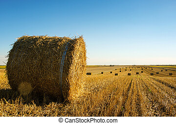 Hay roll on the field