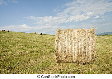 Hay-roll on the field