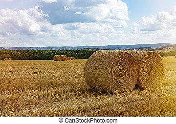 Hay rolls in a field