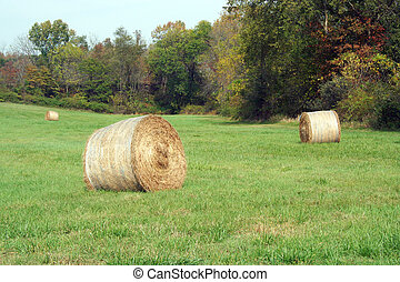 Hay Rolls in a green field