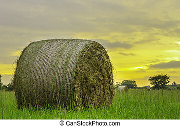Hay Round Bale - A close shot of a hay round bale with a...