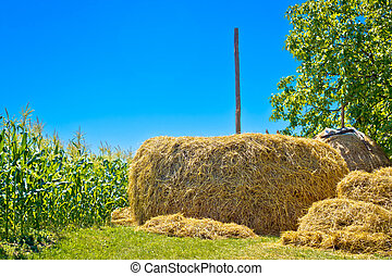 Hay stack and corn field summer view, agricultural landscape...