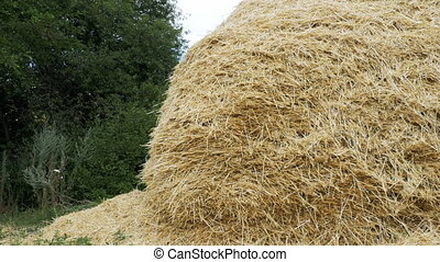 Hay stack on the ground in the village