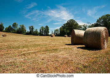 Hay Stacks In Autumn Field
