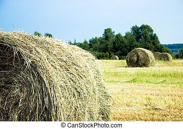 Hay stacks on the field | Summer rural landscape