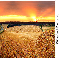 hay straw bale field - bales of hay or straw. field at...
