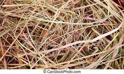 Hay straw rabbit food grass