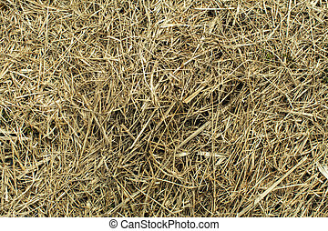 Hay texture of the Dry grass close-up.