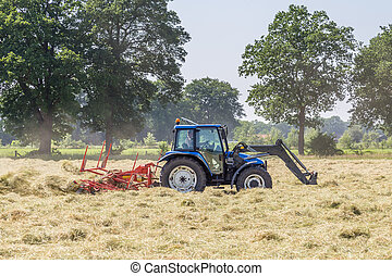 Hay turning to dry grass in the sun on the field in the Netherlands