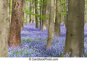 haya, árboles, y, bluebells, wildflowers
