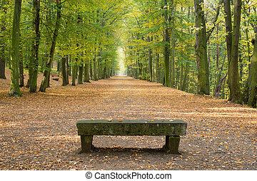haya, avenida, sin, gente en, otoño