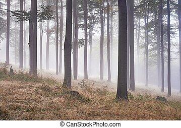 haya, bosque