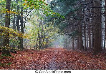 haya, conífero, trayectoria, bosques, entre