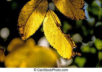haya, luz, hojas, espalda