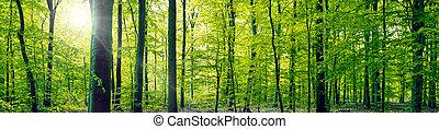 haya, panorama, bosque, paisaje