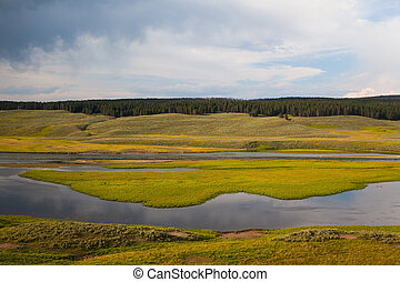 Hayden Valley - landscape of American Bison