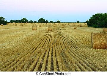hayfield after harvest