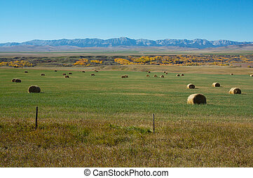 Hayfield and Rocky Mountains