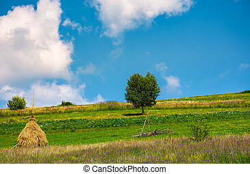 haystack and a tree on the grassy field. beautiful summer...