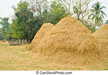 haystack at countryside of Thailand