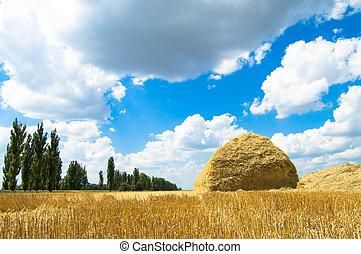 heap of straw after harvesting