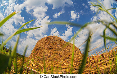 haystack in a field against a blue sky summer nature landscape