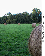 Haystack in a field during summer
