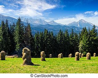 haystack near forest on a meadow in Tatras - haystack near...