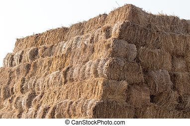 haystack on a farm in nature