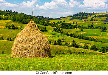 haystack on the grassy field. beautiful summer countryside...