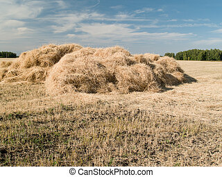 Haystack - haystack harvested on the field for drying