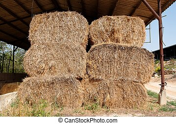 Haystacks at the agricultural farm stored for animal feed