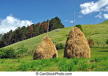 Haystacks in a meadow