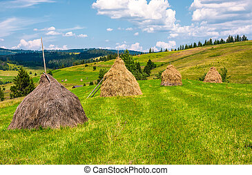 haystacks in a row on a grassy field. beautiful rural...