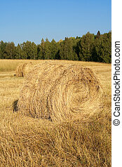 Haystacks in field