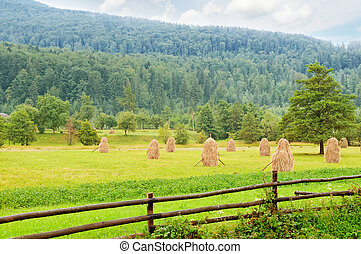 haystacks in the mountain valley of the Carpathian Mountains
