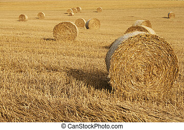 Haystacks on cornfield
