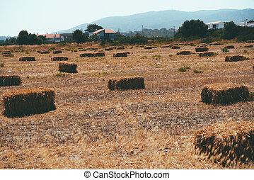 Haystacks on field near the village