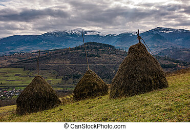 haystacks on grassy meadow in autumn mountains with snowy...